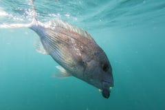 Pescados en línea Imagen de archivo libre de regalías