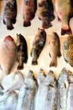 Pescados en línea Fotos de archivo libres de regalías