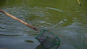 Pescados en la charca y la pesca almacen de metraje de vídeo