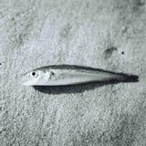 Pescados en la playa Imágenes de archivo libres de regalías