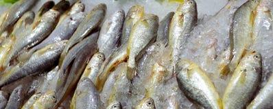 Pescados en la venta Imagen de archivo libre de regalías
