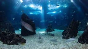 Pescados en Lisboa Oceanarium almacen de video