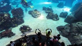 Pescados en Lisboa Oceanarium con la gente, Portugal almacen de metraje de vídeo