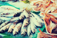 Pescados en mercado de pescados Imagen de archivo libre de regalías