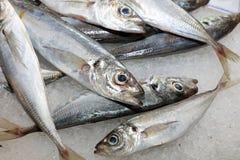 Pescados en mercado en Lisboa Imagenes de archivo