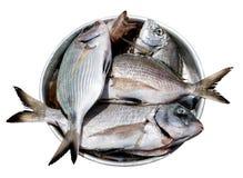 Pescados en placa de metal Imagen de archivo libre de regalías