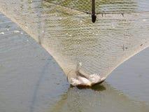 Pescados en red de inmersión cuadrada Fotografía de archivo