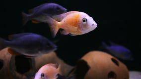 Pescados en un acuario almacen de metraje de vídeo