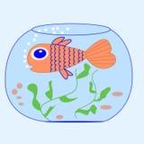 Pescados en un acuario Fotografía de archivo libre de regalías