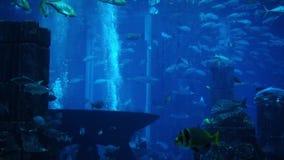 Pescados en un acuario y un oceanarium grandes Acuario