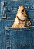 Pescados en un bolsillo Foto de archivo libre de regalías