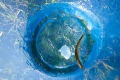 Pescados en cubo Foto de archivo libre de regalías