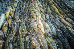 Pescados en un mercado Fotos de archivo