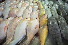 Pescados en un mercado Imagenes de archivo