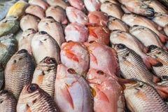 Pescados en un mercado Imágenes de archivo libres de regalías