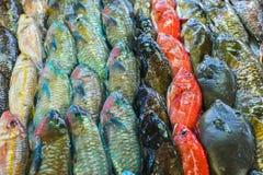Pescados en un mercado Fotografía de archivo