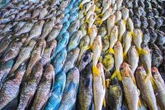 Pescados en un mercado Fotos de archivo libres de regalías