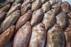 Pescados en un mercado Imagen de archivo