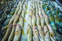 Pescados en un mercado Foto de archivo libre de regalías