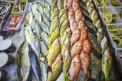 Pescados en un mercado Imagen de archivo libre de regalías