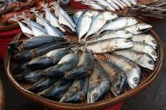 Pescados en una cesta imágenes de archivo libres de regalías