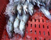 Pescados enfriados frescos en una caja en el mercado del mar adriático Imágenes de archivo libres de regalías