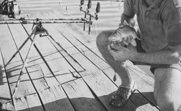 Pescados enganchados en la boca en las manos masculinas, pesca del cebo imagen de archivo libre de regalías