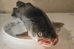 Pescados enteros dentudos grandes en un disco fotografía de archivo