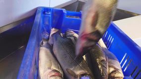 Pescados enteros puestos en envase almacen de metraje de vídeo