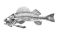 Pescados esqueléticos Fotos de archivo libres de regalías