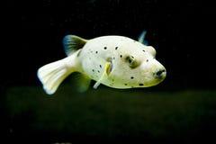 Pescados exóticos Foto de archivo libre de regalías