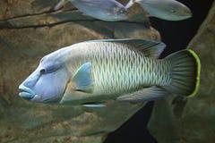 Pescados exóticos fotos de archivo