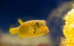 Pescados exóticos Fotografía de archivo libre de regalías