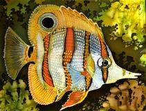 Pescados exóticos Imagen de archivo libre de regalías