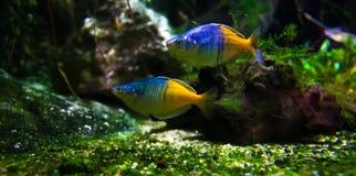 Pescados exóticos en acuario imagenes de archivo