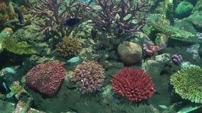 Pescados exóticos en el acuario con el arrecife de coral colorido almacen de video