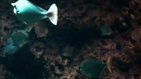 Pescados exóticos en un primer grande del acuario almacen de metraje de vídeo