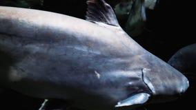 Pescados exóticos en un primer grande del acuario metrajes