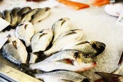 Pescados expuestos Foto de archivo libre de regalías