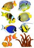 Pescados exóticos Foto de archivo