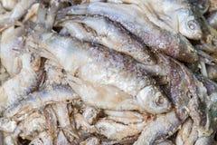 Pescados fermentados Imagenes de archivo