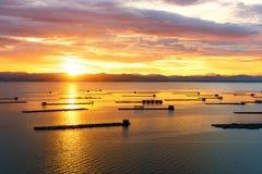 Pescados flotantes Fotografía de archivo libre de regalías