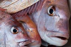 Pescados frescos imagen de archivo libre de regalías