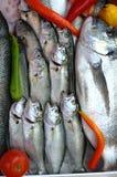 Pescados frescos Fotos de archivo