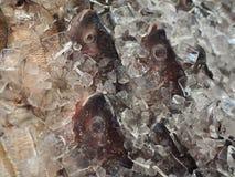 Pescados frescos fotografía de archivo