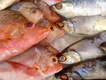 Pescados frescos Foto de archivo libre de regalías