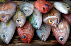 Pescados frescos coloridos de la mezcla Imagenes de archivo