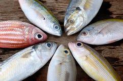 Pescados frescos coloridos de la mezcla Fotografía de archivo