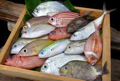 Pescados frescos coloridos de la mezcla Fotografía de archivo libre de regalías