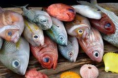 Pescados frescos coloridos de la mezcla Fotos de archivo